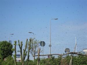 bijen-wolk